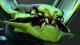80px-Viper
